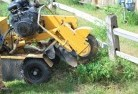Newlyn North Stump grinding services 3